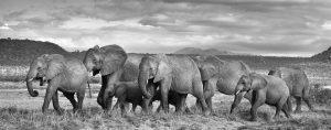 tiffany collezione gioielli elefanti save the wild