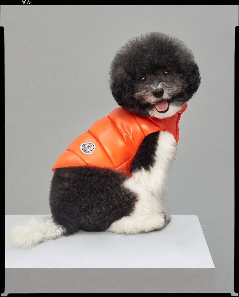 Drezzy Per Piumino Arancione Cane Moncler w61qx