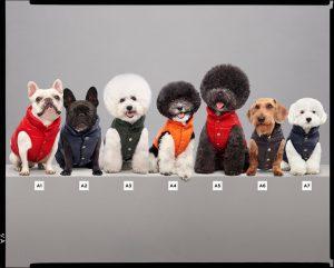 moncler piumino per cani collezione poldo dog couture